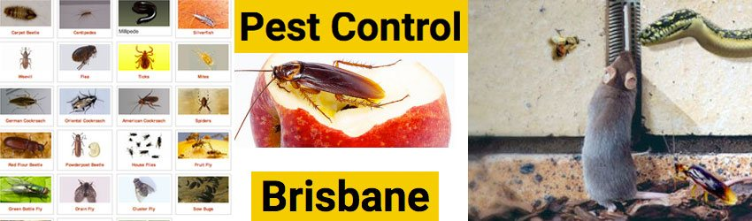 Pest Control Griffith University