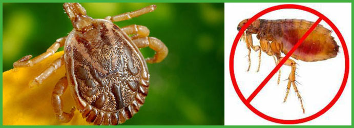 Flea Pest Control Fern Ridge