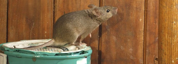 Rodent Pest Control Burnett Creek
