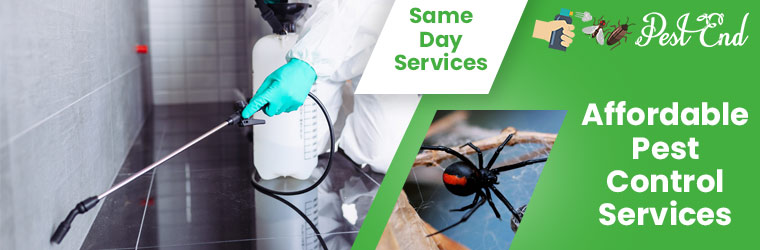Eco Friendly Pest Control Services