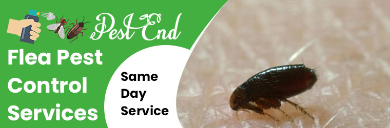 Flea Pest Control Services National Park