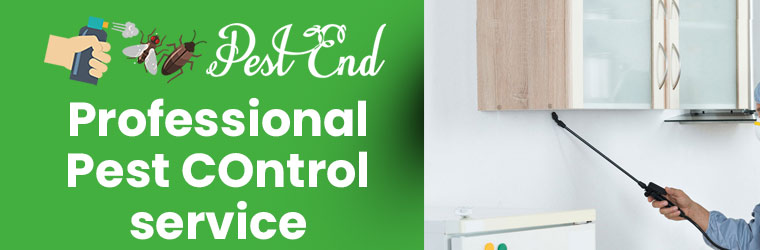 Professional Pest Control Services Hope Valley