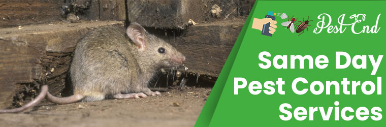Same Day Pest Control Services