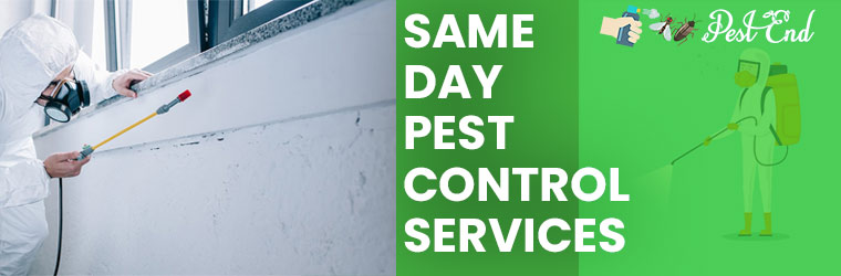 Same Day Pest Control Service Goodmans Ford