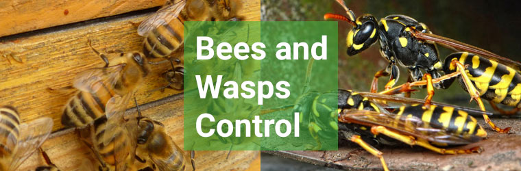 Bees and Wasp Control