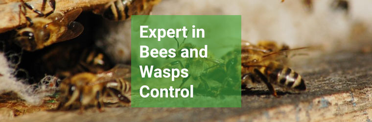 Expert Bee and Wasp Control