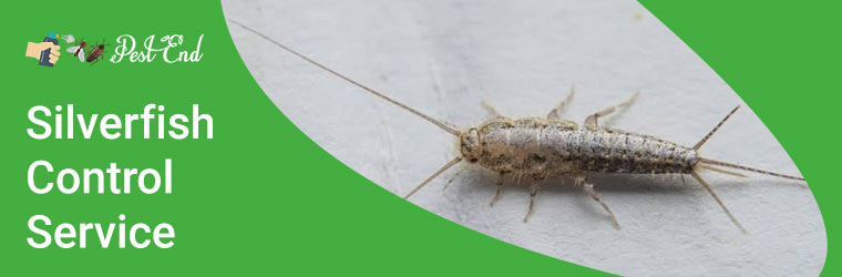 How to Control Silverfish at Home Permanently